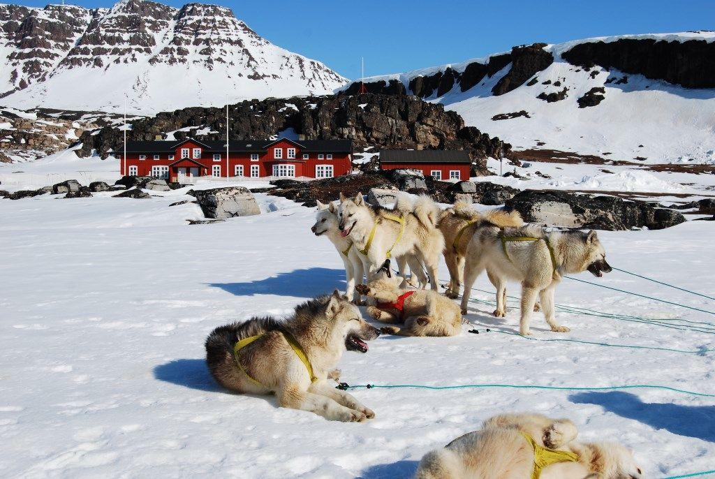 Psy v Grónsku